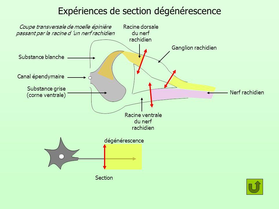 Expériences de section dégénérescence