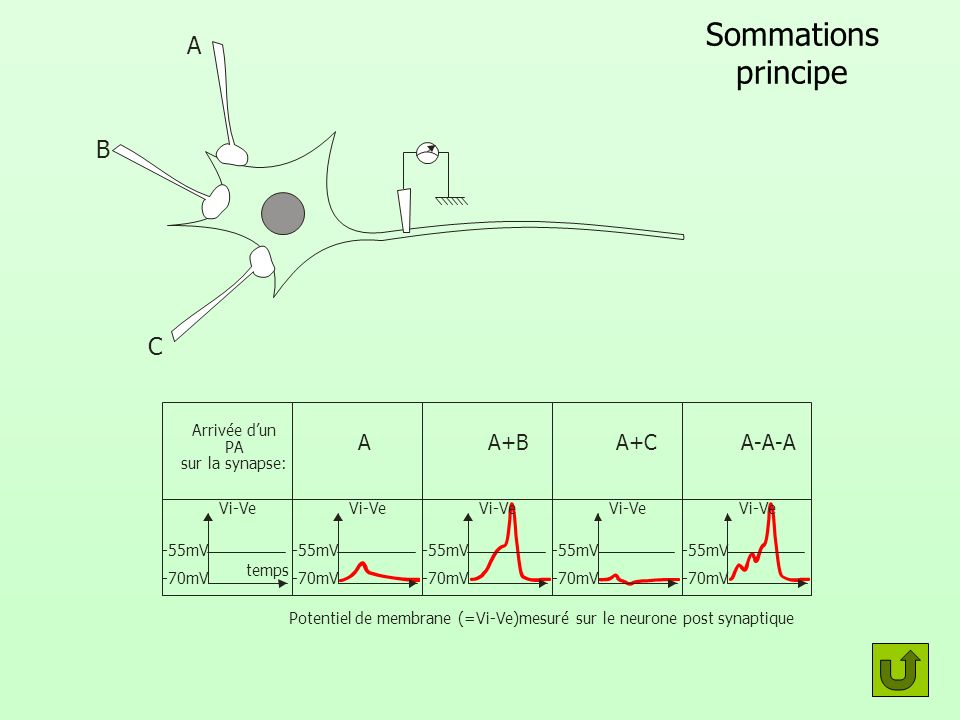 Potentiel de membrane (=Vi-Ve)mesuré sur le neurone post synaptique
