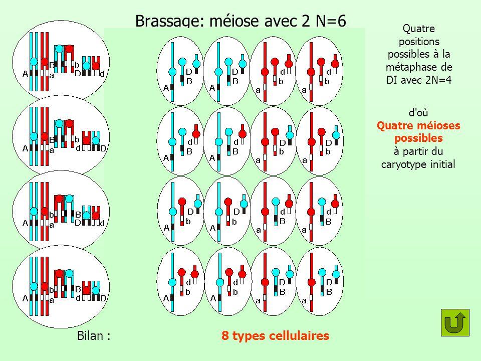Brassage: méiose avec 2 N=6