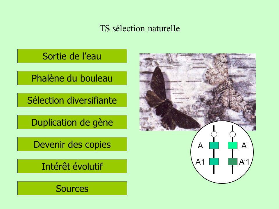 TS sélection naturelle