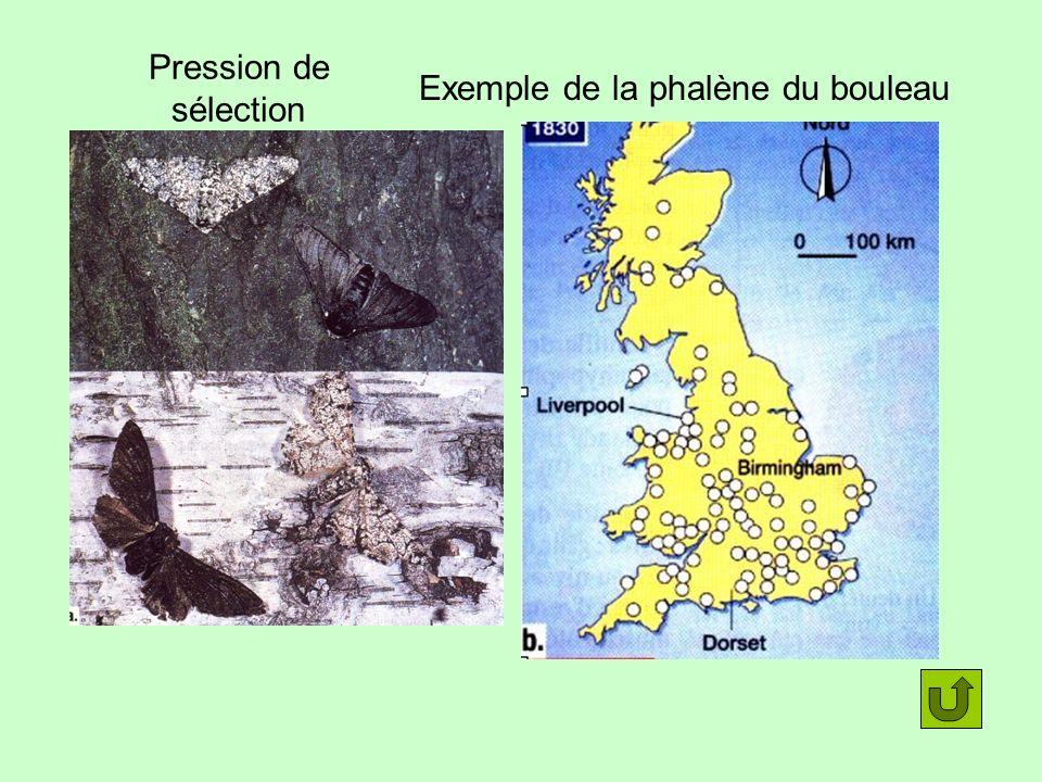 Exemple de la phalène du bouleau