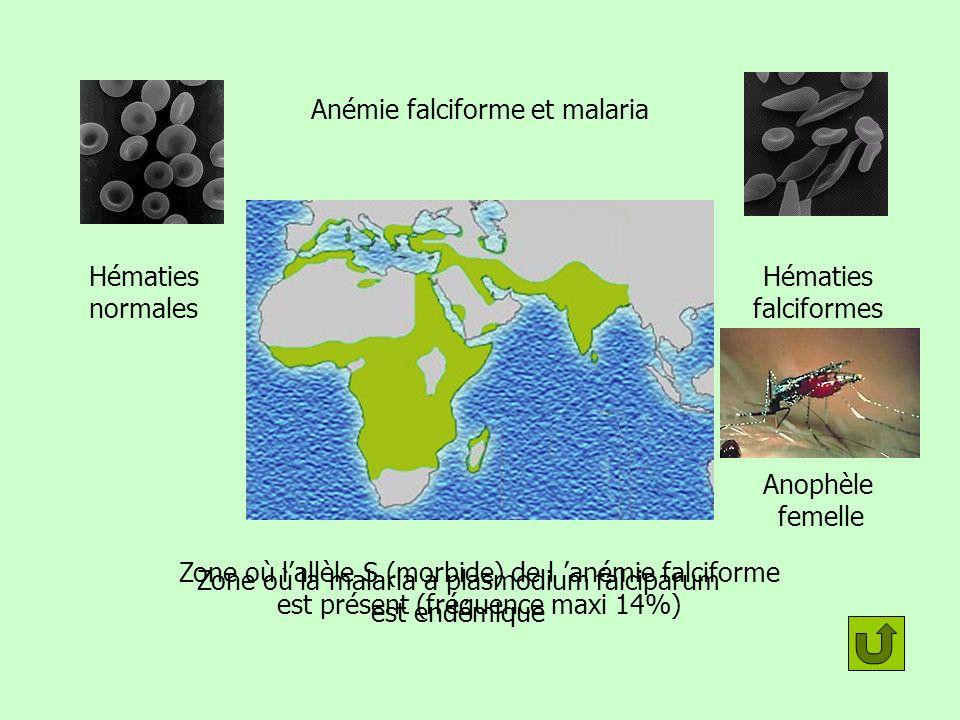 Anémie falciforme et malaria