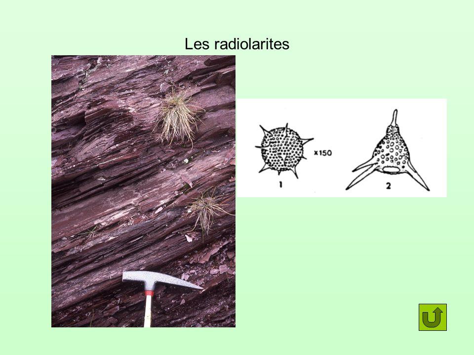 Les radiolarites