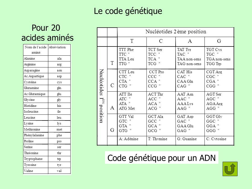 Code génétique pour un ADN 64 codons
