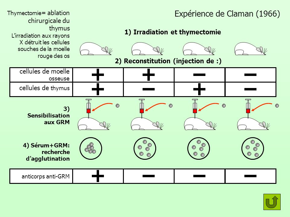 Expérience de Claman (1966)