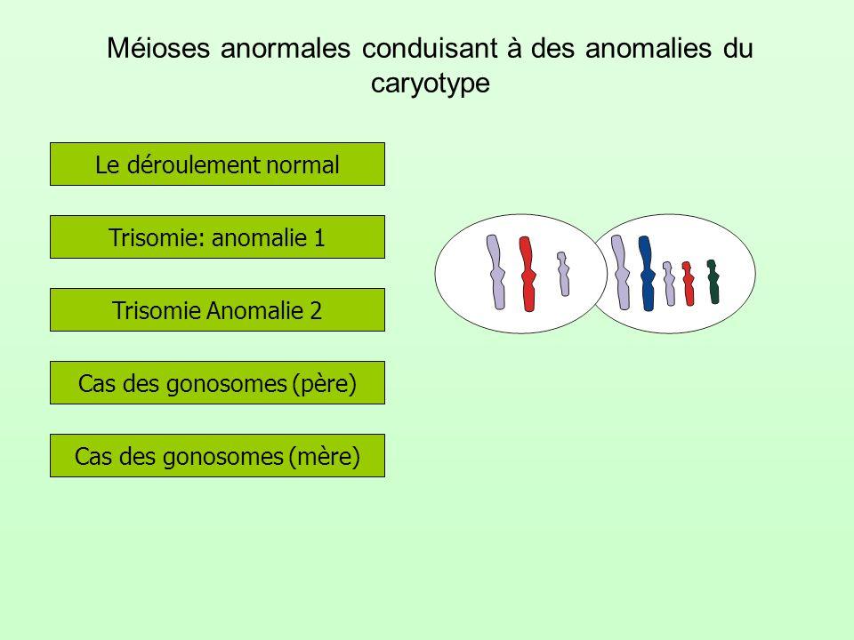 Méioses anormales conduisant à des anomalies du caryotype