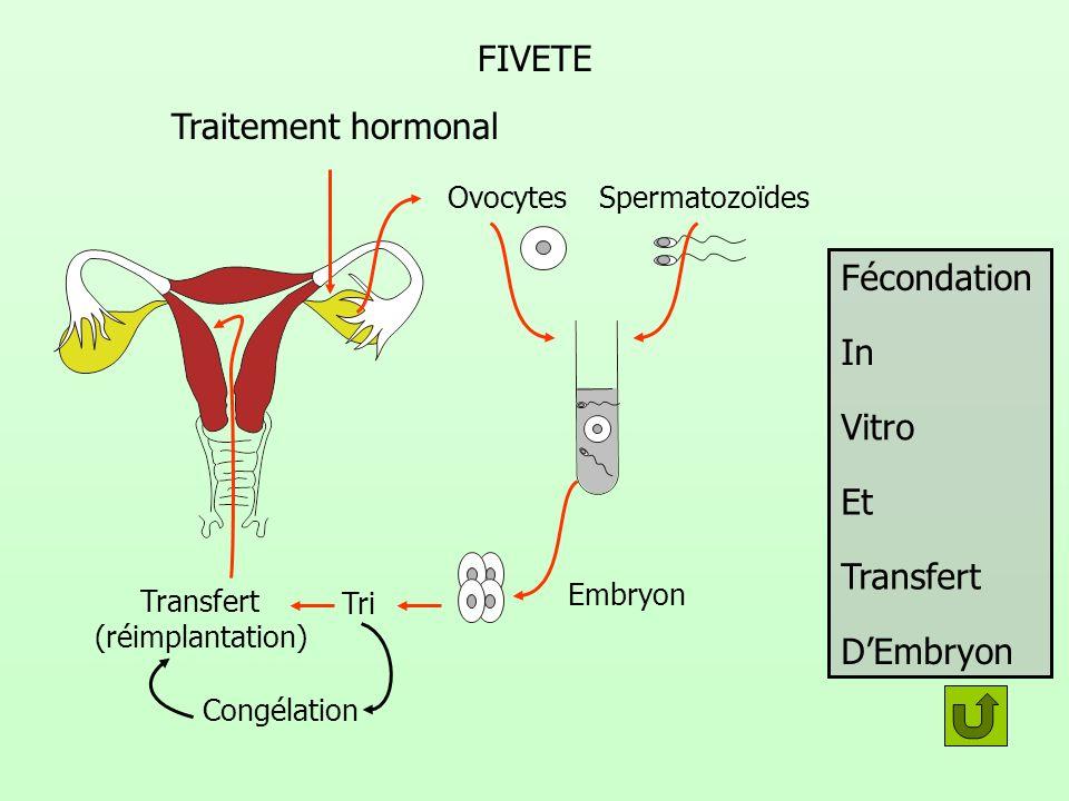 FIVETE Traitement hormonal Fécondation In Vitro Et Transfert D'Embryon