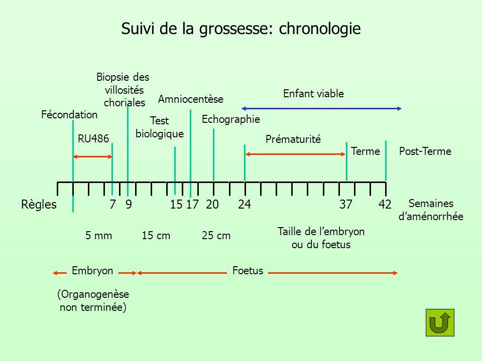 Suivi de la grossesse: chronologie