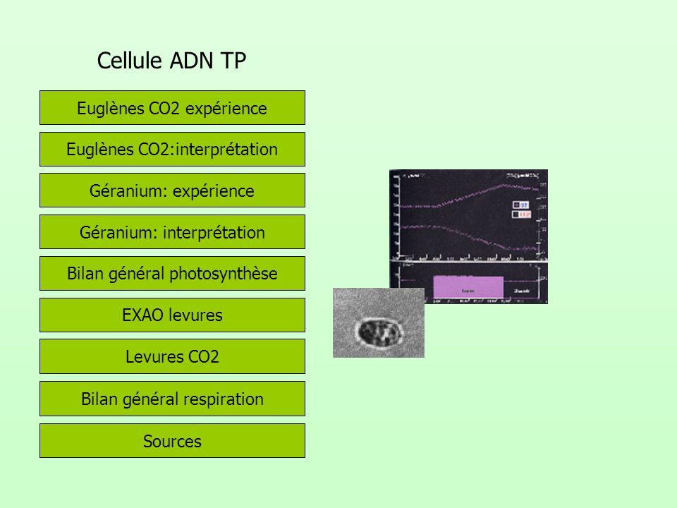 Cellule ADN TP Euglènes CO2 expérience Euglènes CO2:interprétation