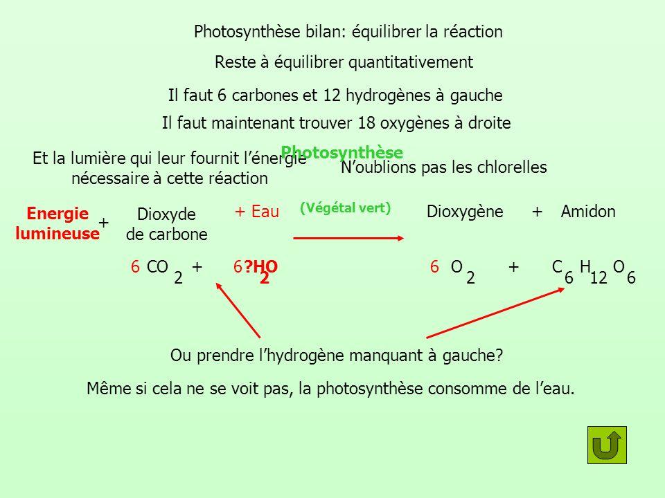 Photosynthèse bilan: équilibrer la réaction