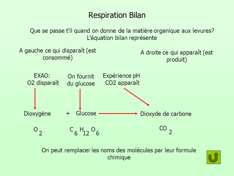 Respiration Bilan Que se passe t'il quand on donne de la matière organique aux levures L'équation bilan représente.