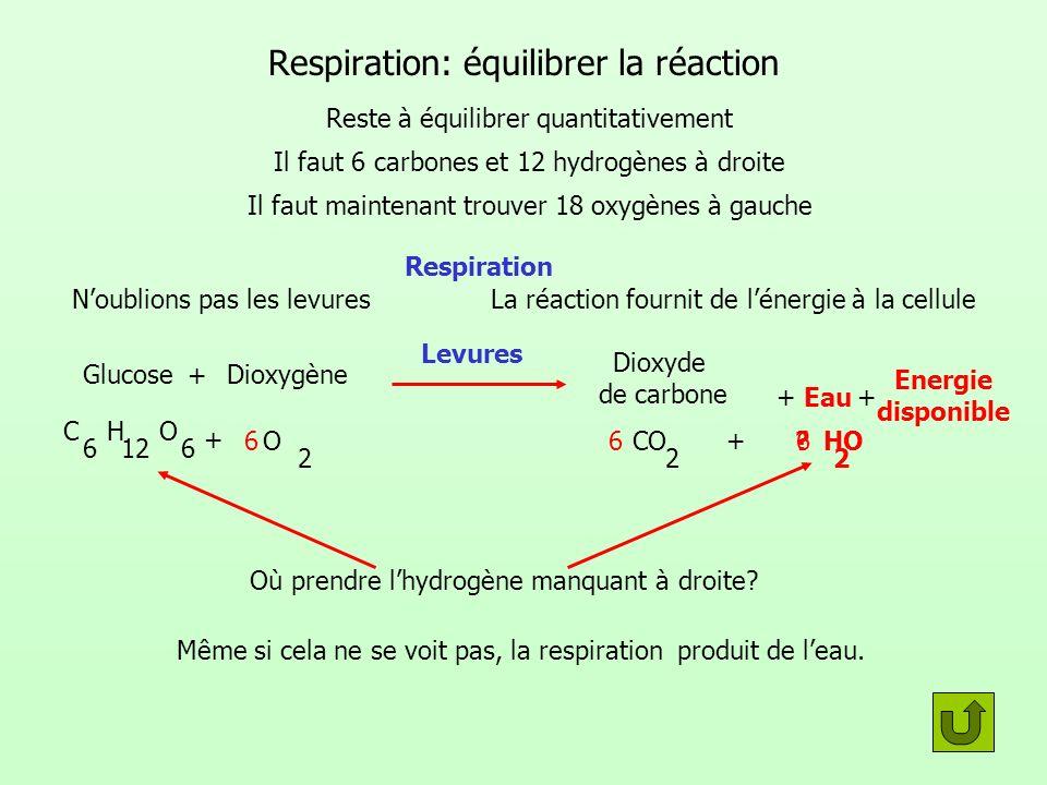 Respiration: équilibrer la réaction