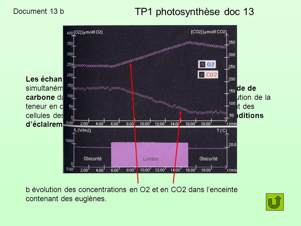 TP1 photosynthèse doc 13 Document 13 b