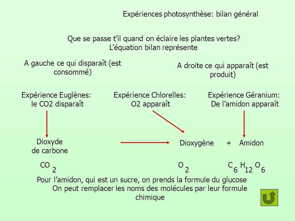 Expériences photosynthèse: bilan général