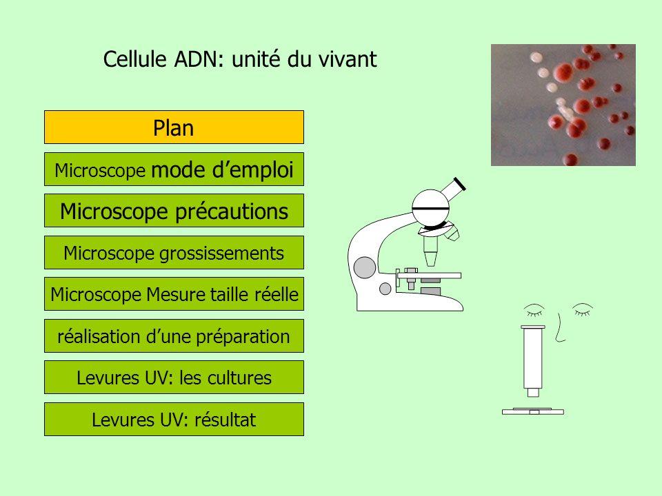 Cellule ADN: unité du vivant