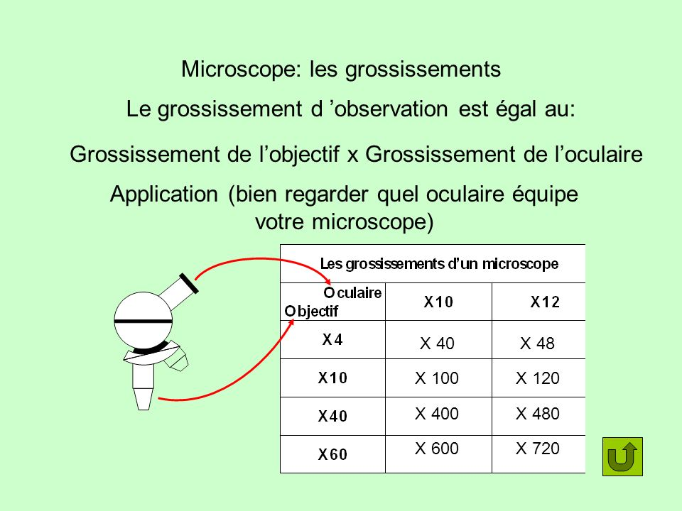Microscope: les grossissements