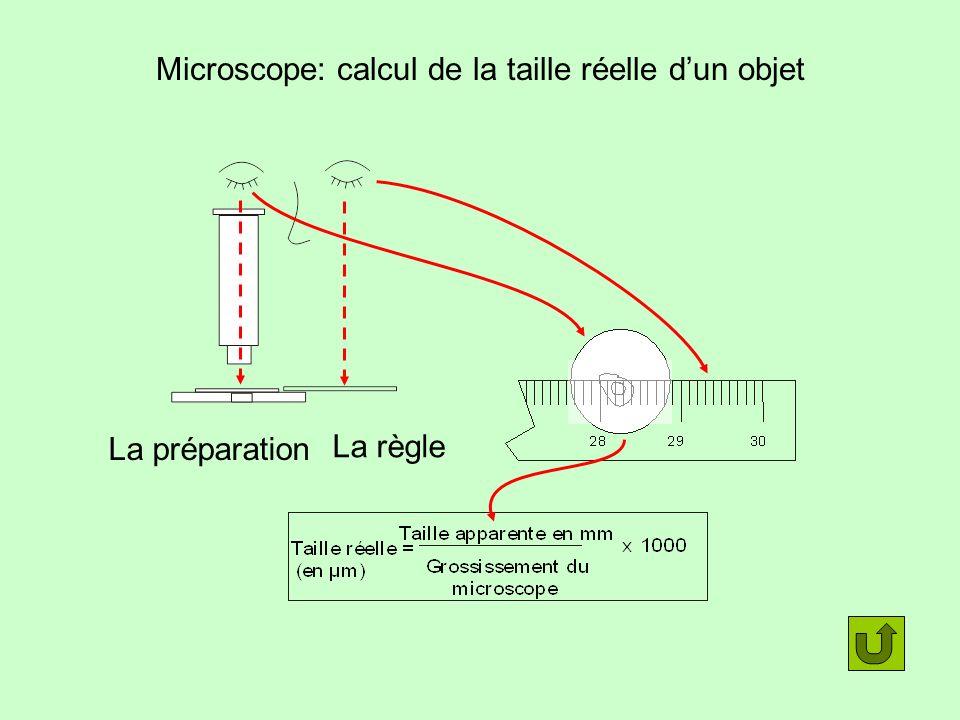 Microscope: calcul de la taille réelle d'un objet