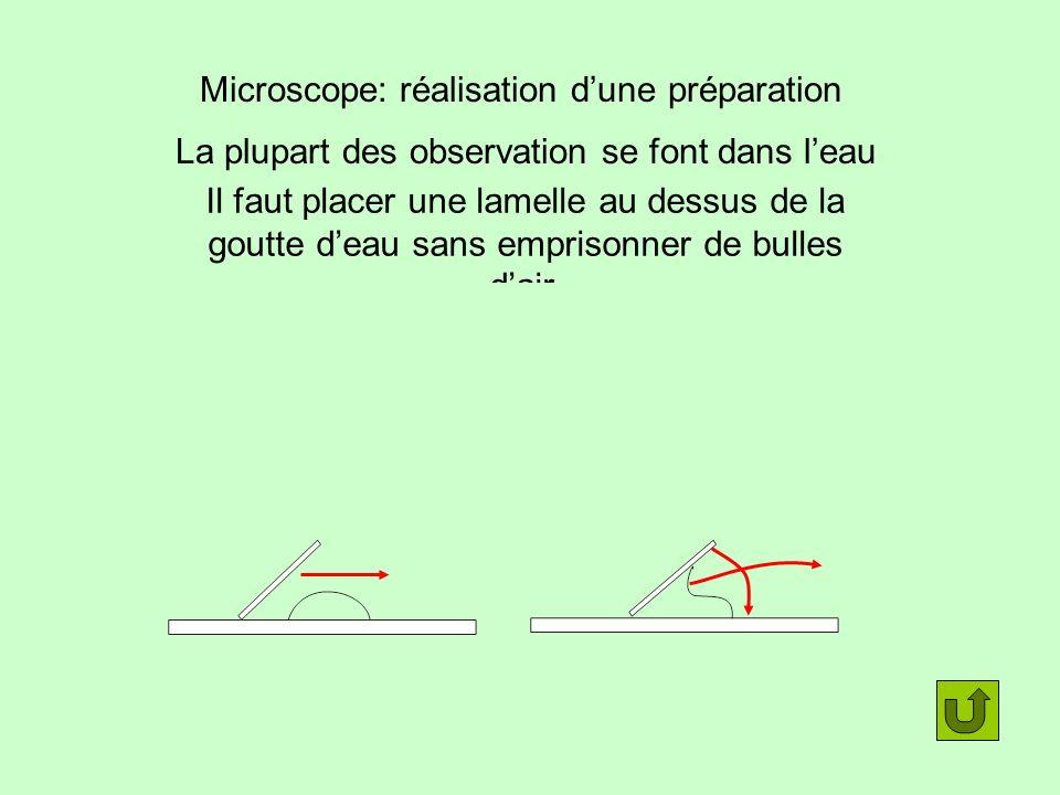 Microscope: réalisation d'une préparation