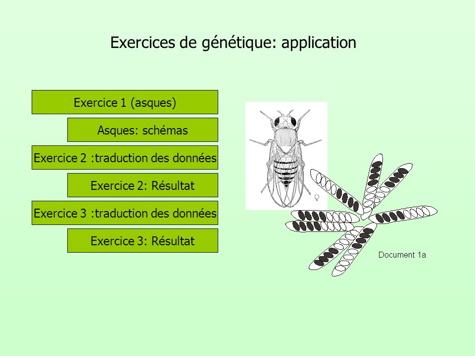 Exercices de génétique: application