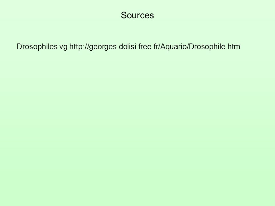 Sources Drosophiles vg http://georges.dolisi.free.fr/Aquario/Drosophile.htm