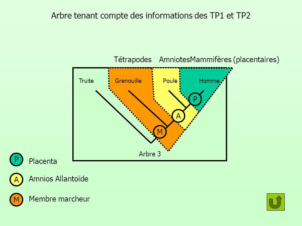 Arbre tenant compte des informations des TP1 et TP2
