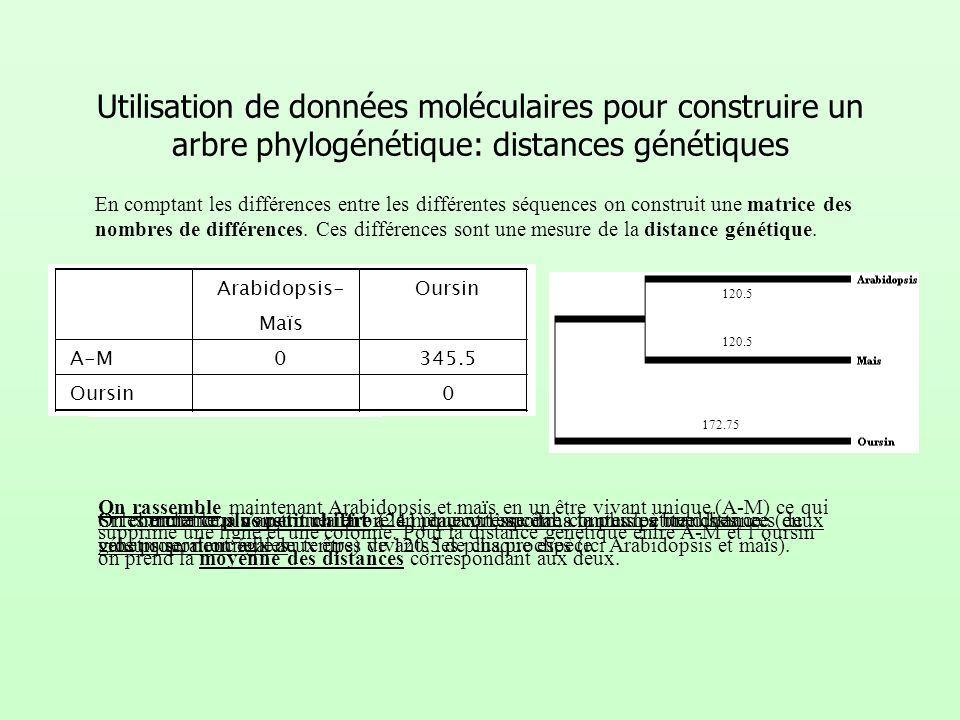 Utilisation de données moléculaires pour construire un arbre phylogénétique: distances génétiques
