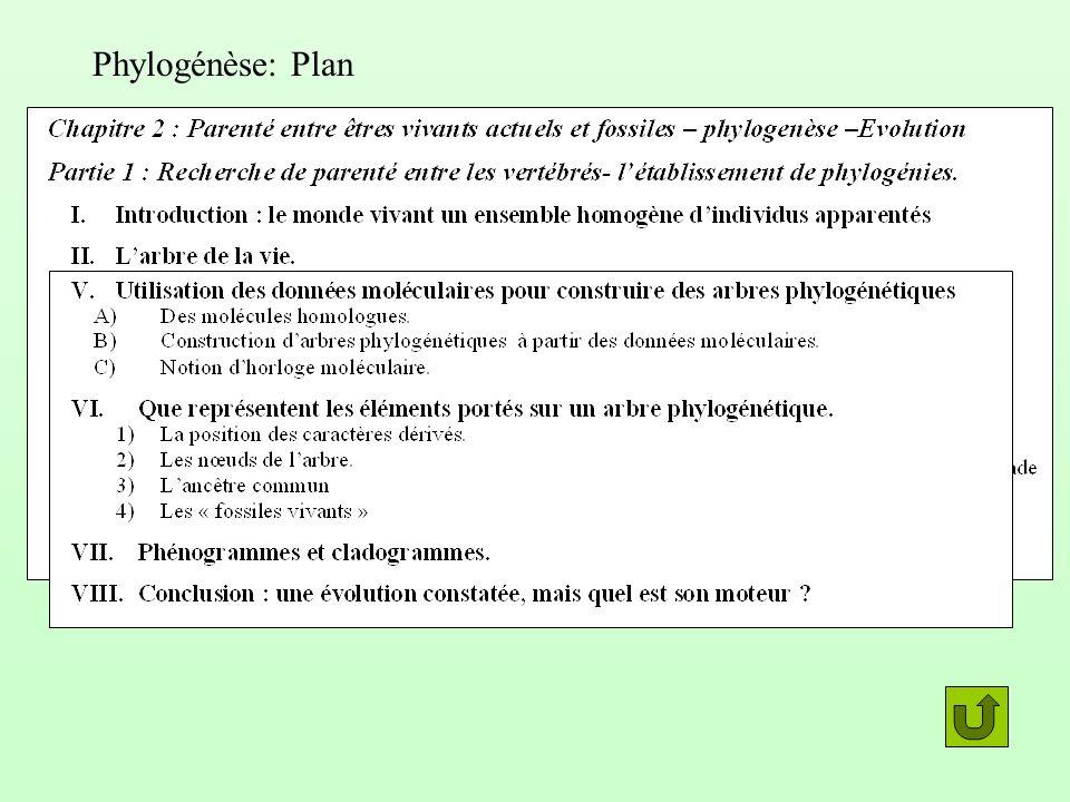 Phylogénèse: Plan