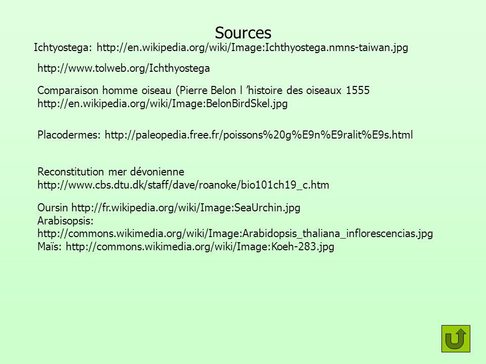 Sources Ichtyostega: http://en.wikipedia.org/wiki/Image:Ichthyostega.nmns-taiwan.jpg. http://www.tolweb.org/Ichthyostega.