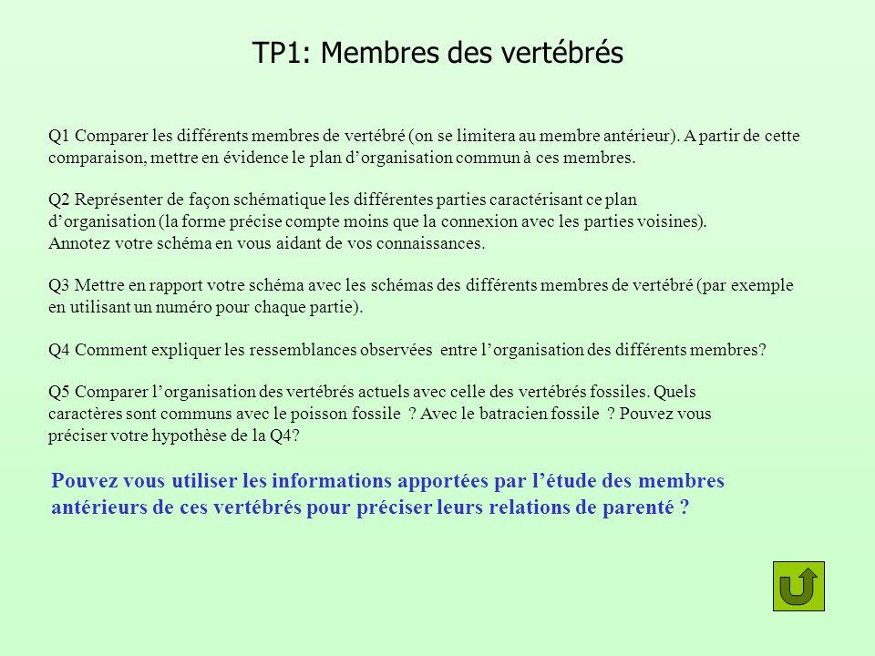 TP1: Membres des vertébrés