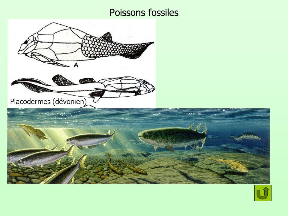Poissons fossiles Placodermes (dévonien)