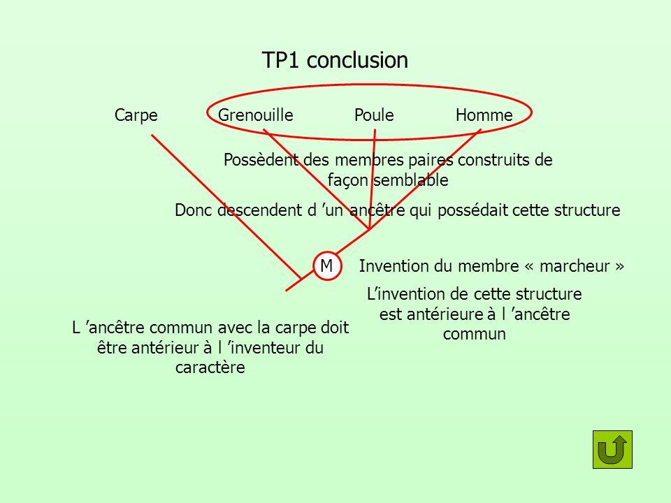TP1 conclusionPossèdent des membres paires construits de façon semblable. Carpe. Grenouille. Poule.