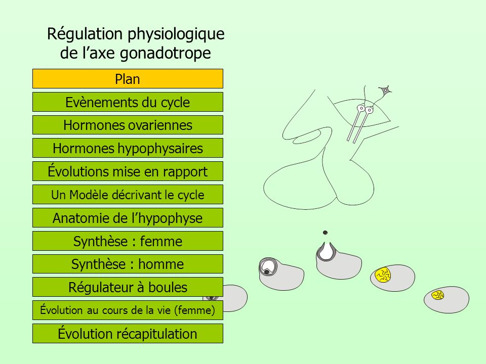 Régulation physiologique de l'axe gonadotrope