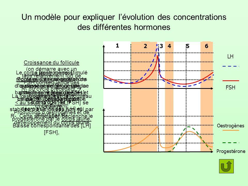 Un modèle pour expliquer l'évolution des concentrations des différentes hormones