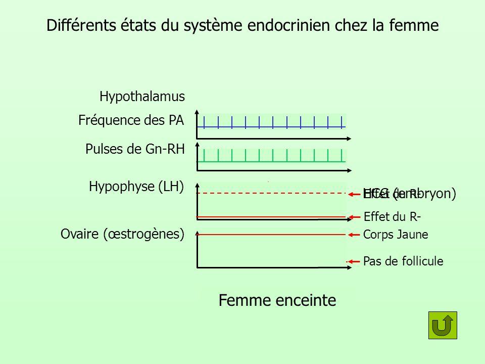 Différents états du système endocrinien chez la femme