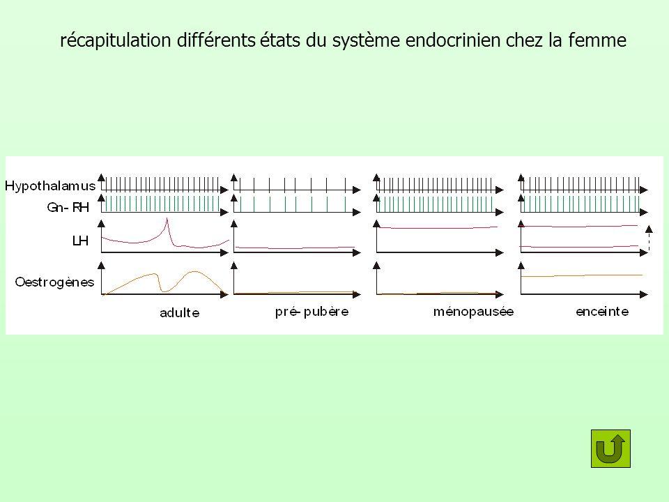 récapitulation différents états du système endocrinien chez la femme