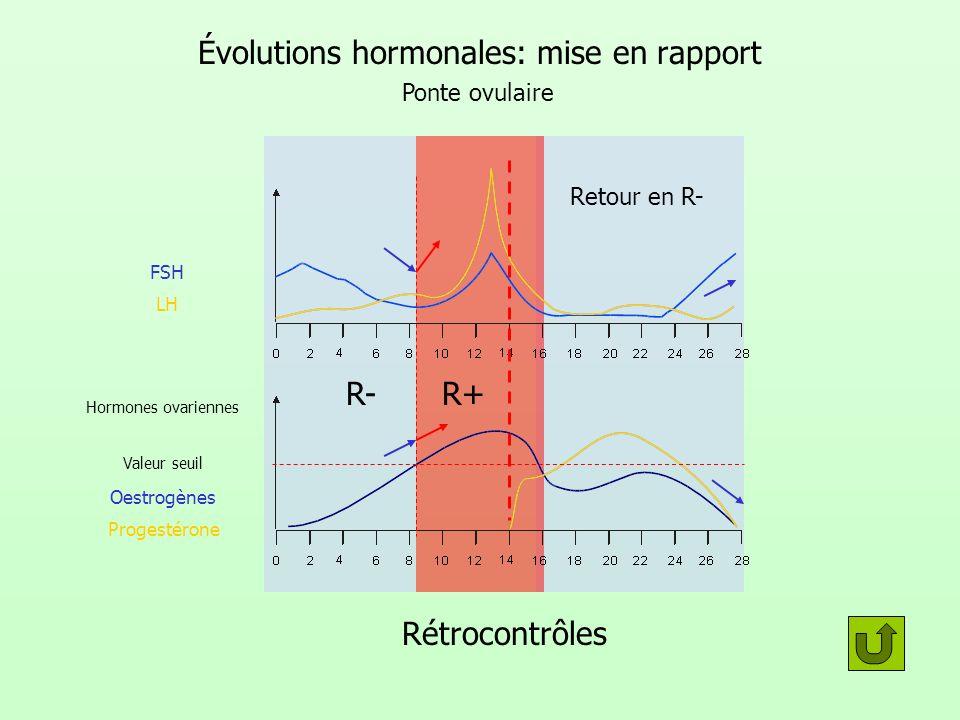 Évolutions hormonales: mise en rapport