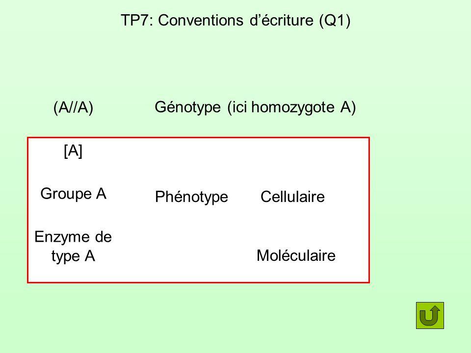 TP7: Conventions d'écriture (Q1)