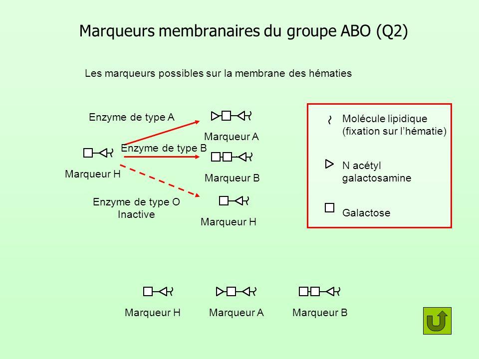 Marqueurs membranaires du groupe ABO (Q2)