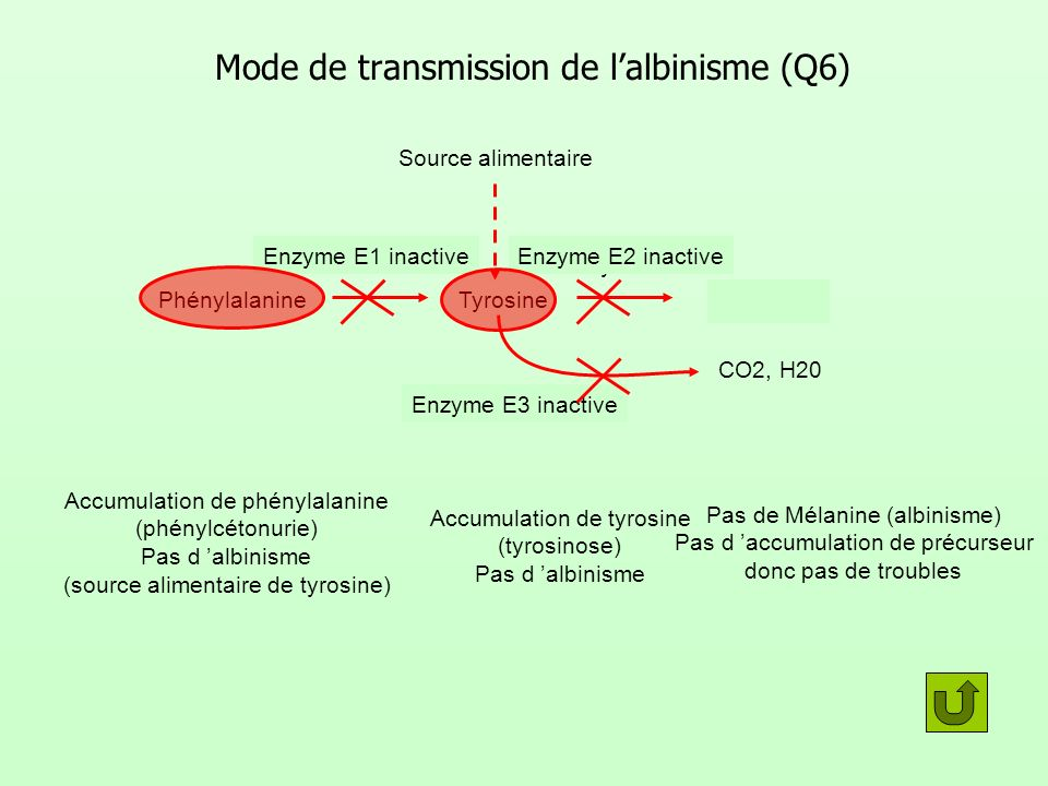 Mode de transmission de l'albinisme (Q6)