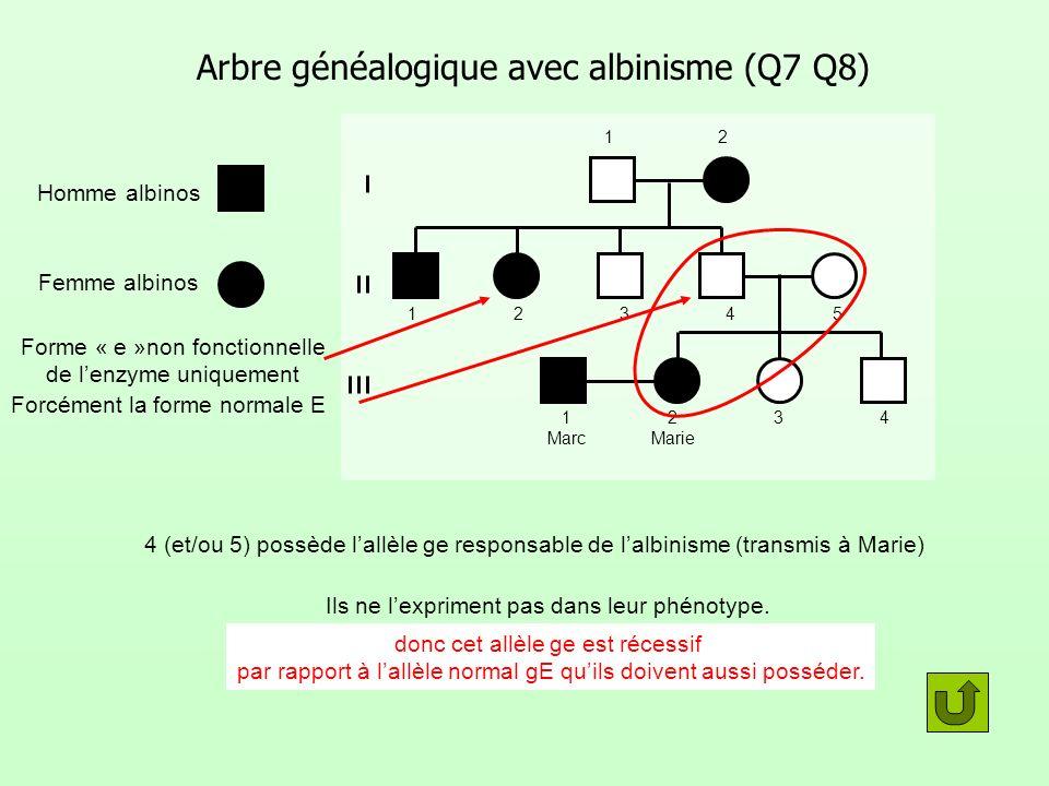 Arbre généalogique avec albinisme (Q7 Q8)