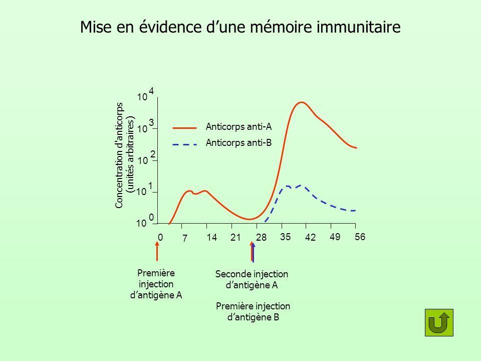 Mise en évidence d'une mémoire immunitaire