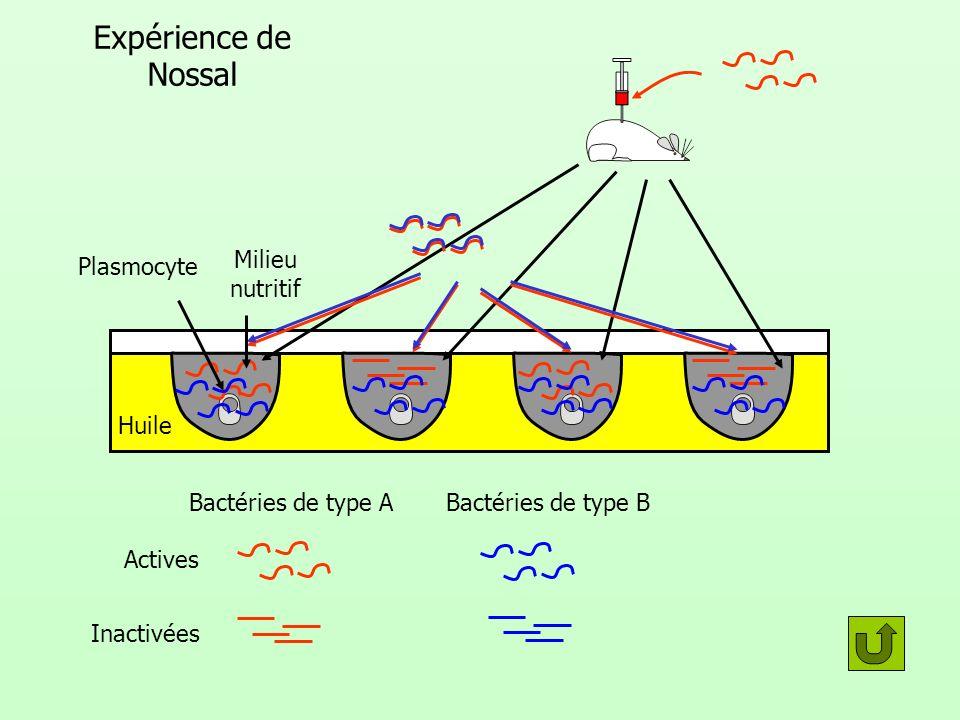 Expérience de Nossal Plasmocyte Milieu nutritif Huile
