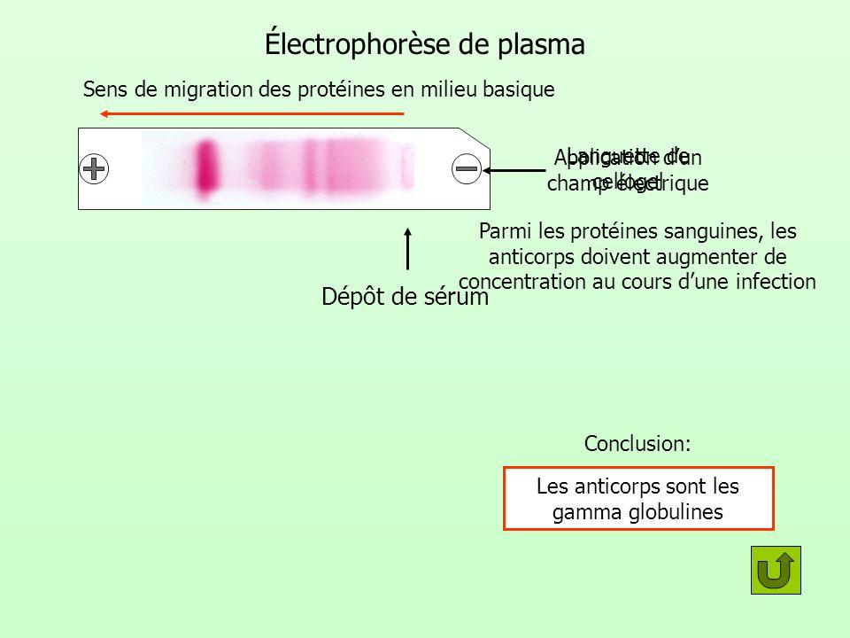 Électrophorèse de plasma