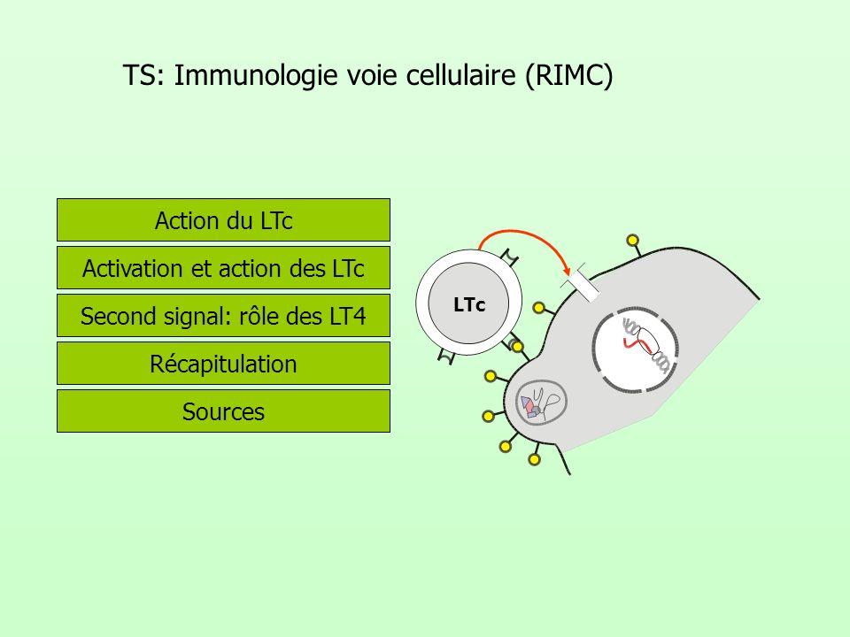 TS: Immunologie voie cellulaire (RIMC)