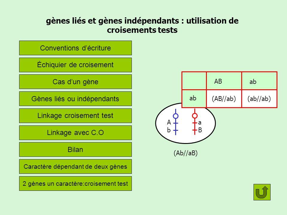 gènes liés et gènes indépendants : utilisation de croisements tests