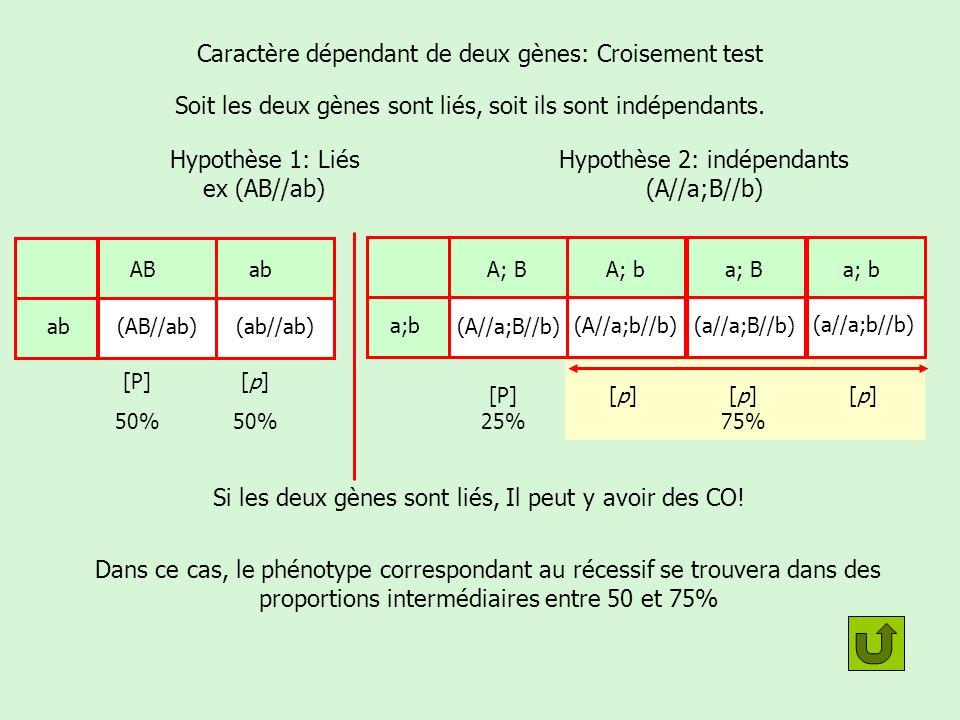 Caractère dépendant de deux gènes: Croisement test
