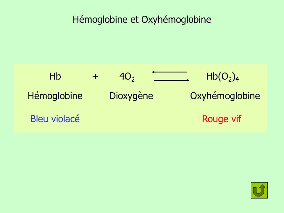 Hémoglobine et Oxyhémoglobine