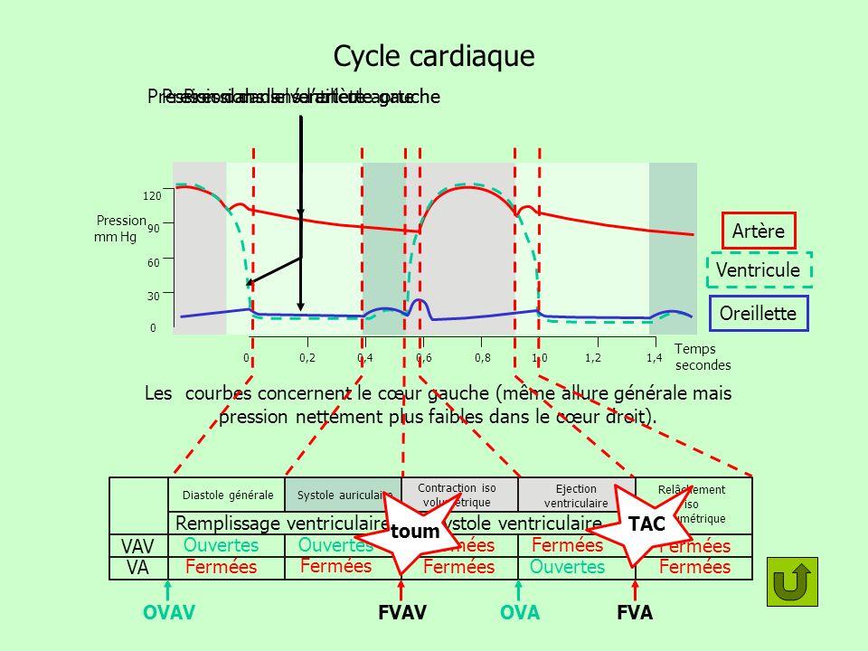 Cycle cardiaque Pression dans le ventricule gauche
