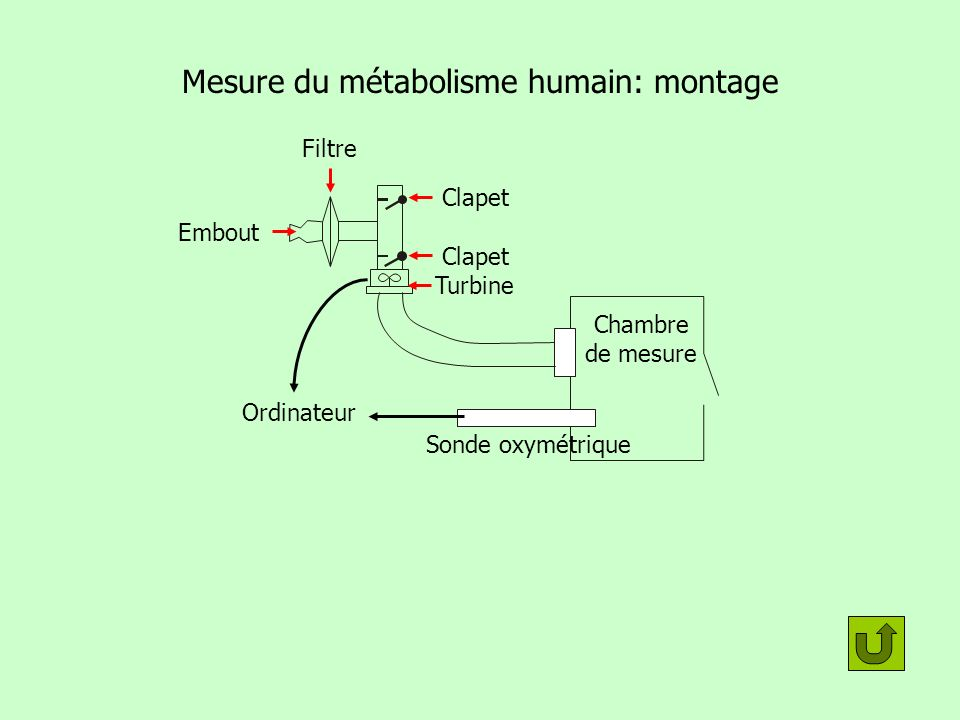 Mesure du métabolisme humain: montage