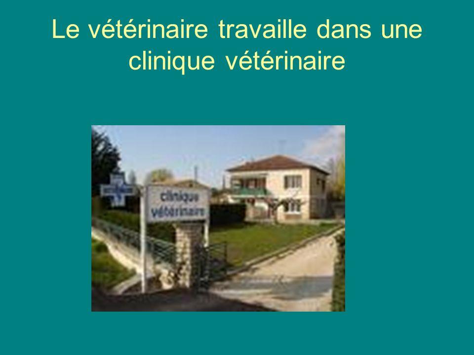 Le vétérinaire travaille dans une clinique vétérinaire